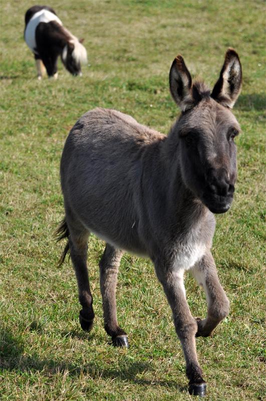 Beliebt Bevorzugt Fragen zur Haltung von Esel von der der Fütterung , Erziehung #XV_21