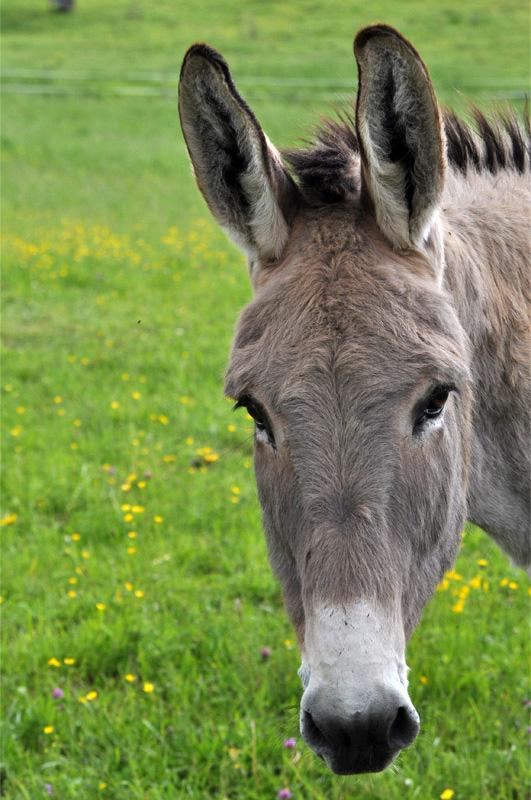 Außergewöhnlich Fragen zur Haltung von Esel von der der Fütterung , Erziehung &DN_87